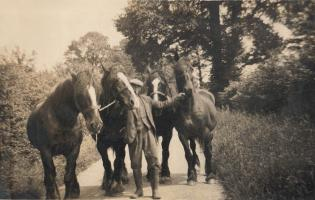 Working horses at Low Farm